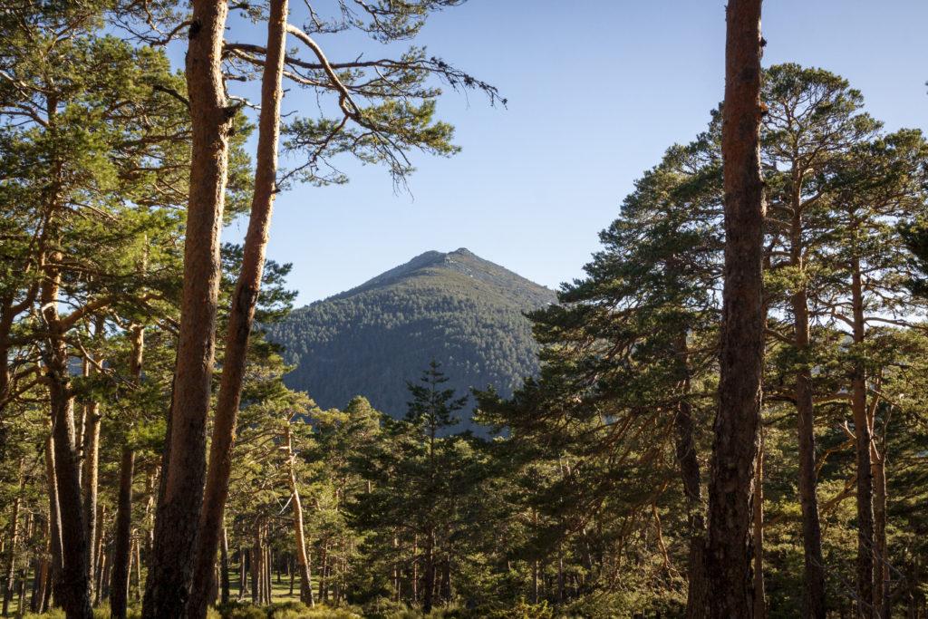 Chalets Sierra de Guadarrama | Inmobiliaria